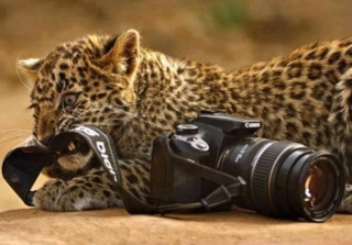 shoot animals with camera not with a gun